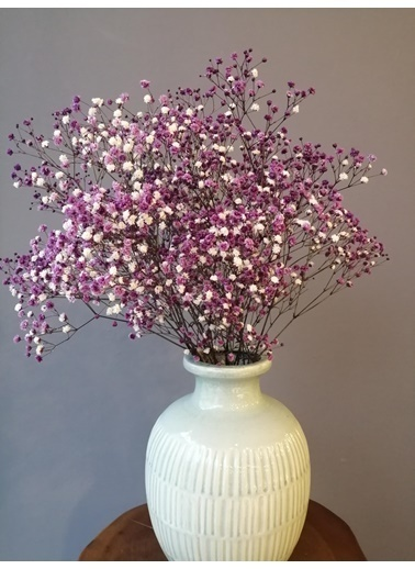 Kuru Çiçek Deposu Kuru Çiçek 1.Kalite Şoklanmış Dökülmeyen Mor Cipso Demeti Mor